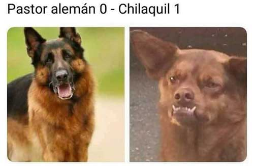 memes-mexico-vs-alemania-pastor-aleman